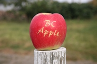 Organic apple British Columbia