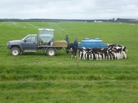 Dairy production in New Zealand