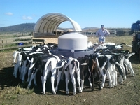 Dairy production in Australia