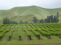Vinification in New Zealand