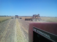 Wheat Harvest in Australia